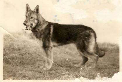C:\Users\IVYMOOR\Documents\My Scans\Bill's 1st GSD Branda.jpg